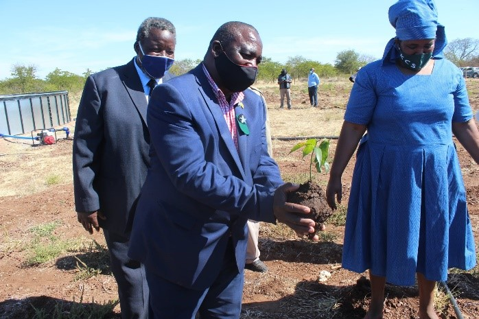 Figure 4: Mr Mokgethi, Gobojango Kgosi holding a mango tree on the site a part of the groundbreaking for the planting of vegetables and fruit trees in the plot. Looking over is Mr Onketetse Serumola, Deputy Kgosi from Bobonong representing the Paramount Kgosi for Bobirwa; and KCS CEO, Ms Morule
