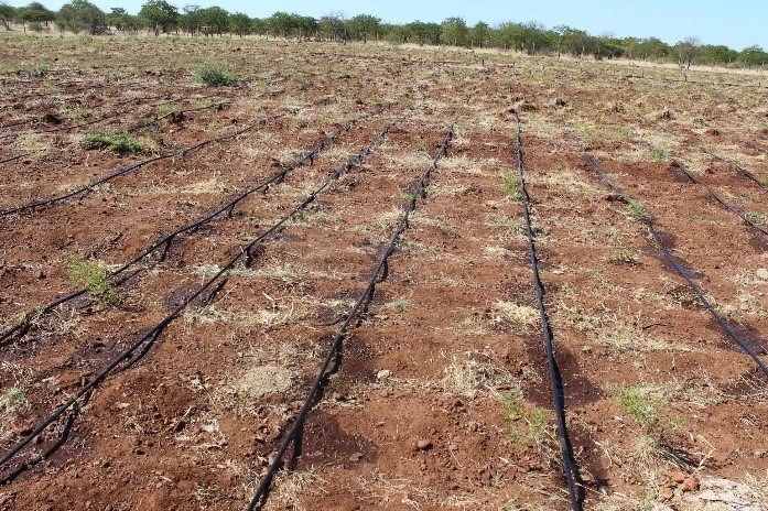 Figure 5: 1ha garden and irrigation system in both villages (Gobojango and Tsetsebjwe) where the community can plant vegetables to feed vulnerable groups and also supply the local market if there are surpluses.